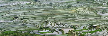 Subsistent farming landscape in china